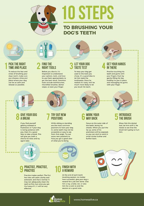 10 Steps to Brushing your dog s Teeth-page-001