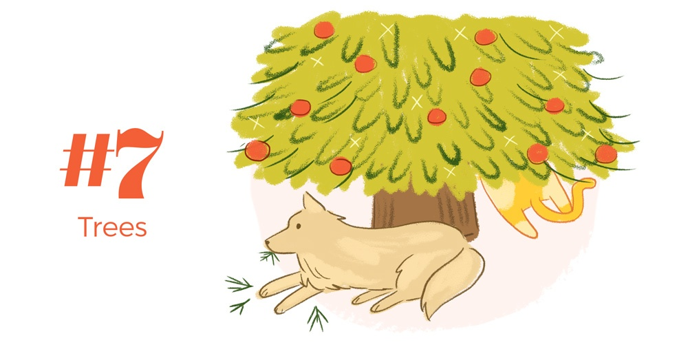 9-holiday-hazards-pets-trees