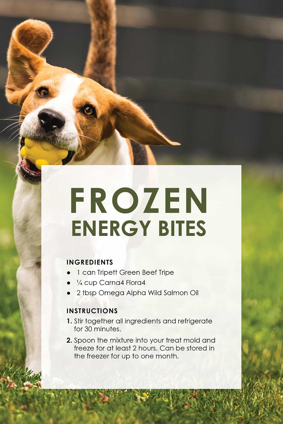 dog_treat_recipes3