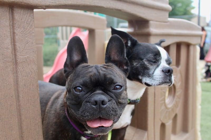 choosing-dog-daycare