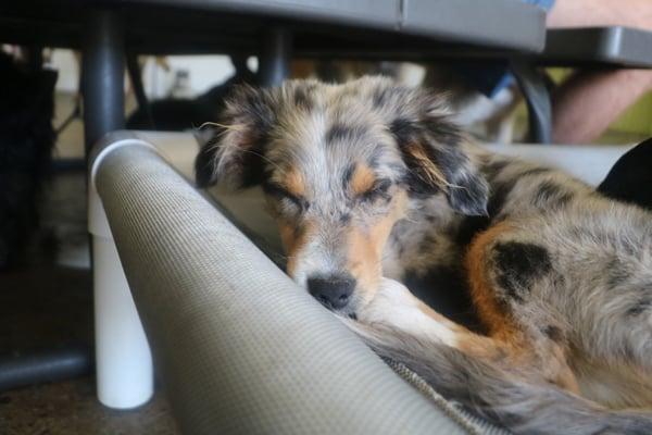 dog-daycare-peace-of-mind