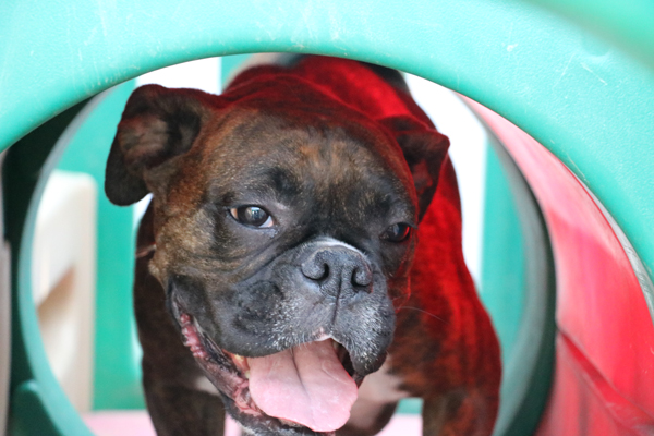 dog-daycare-routine