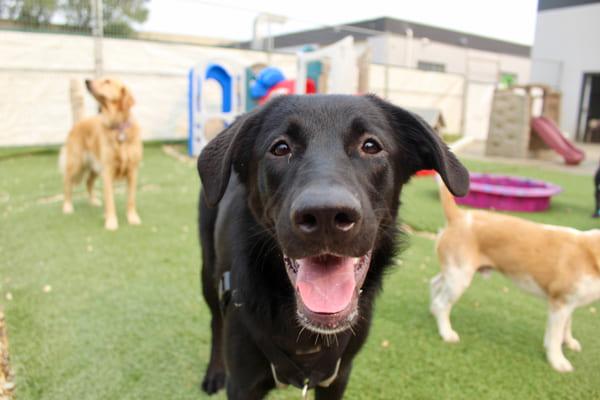 dog-daycare-socializing
