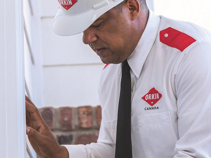 orkin-inspect-home