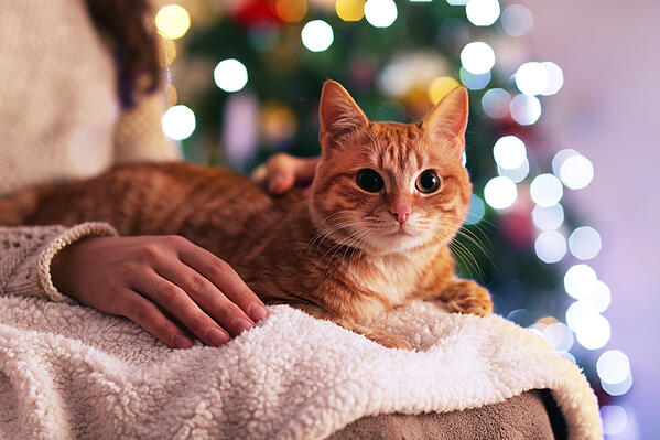 Red-cat-at-home-in-Christmas-time