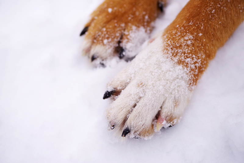Paws-of-a-dog-on-snow