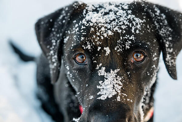 cute-dog-waiting-for-food-in-snow
