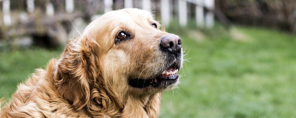 dog-food-for-seniors-chapter-8