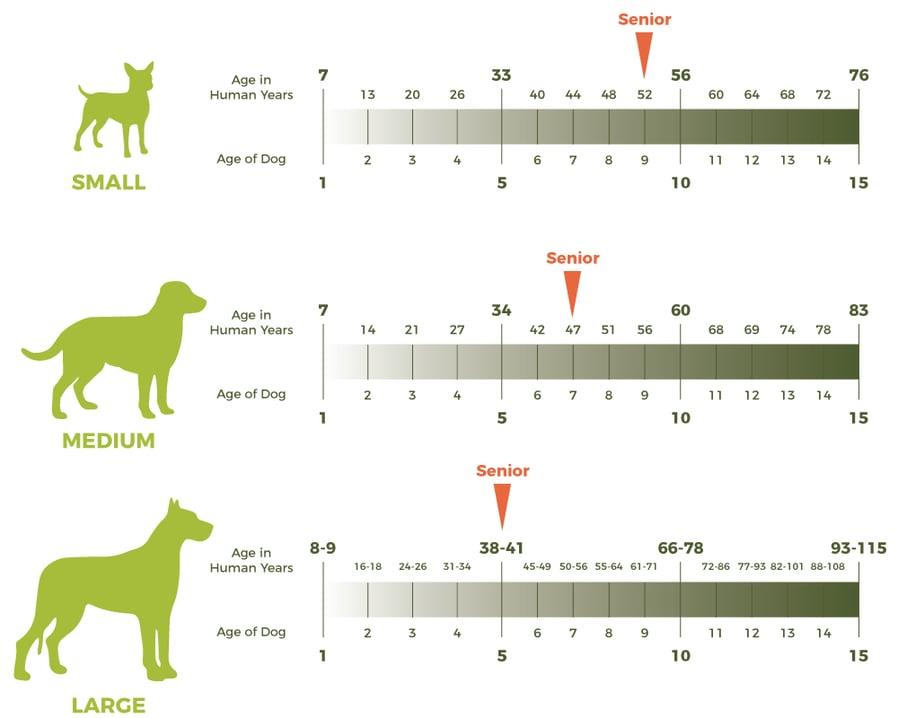 dog-age-chart
