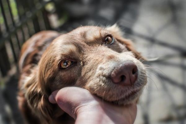 hearing-vision-old-senior-dog