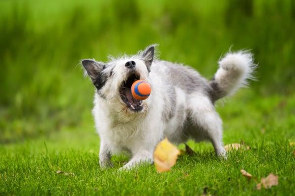 physical-activity-old-senior-dog