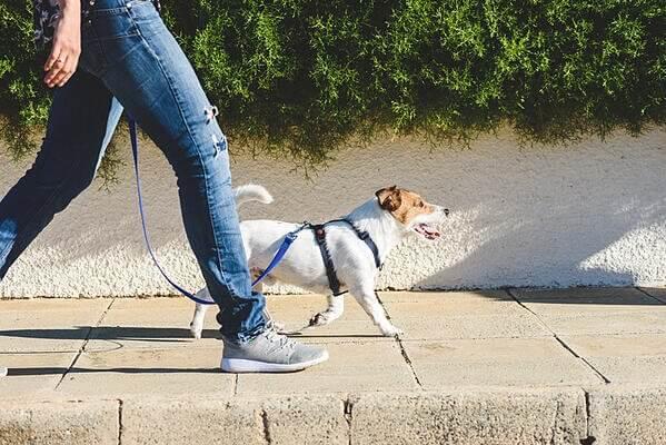 dog-walking-loose-leash