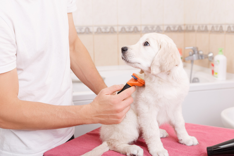 dog-grooming-brushing