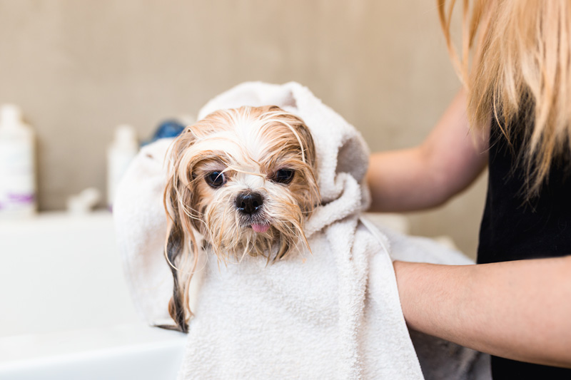general-dog-grooming-tips