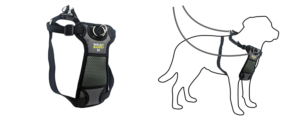 walk-right-two-touch-harness