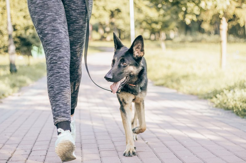 woman-leash-dog