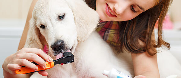 puppy-toothbrush