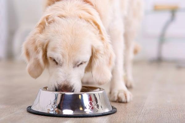 dog-eating-food-bowl