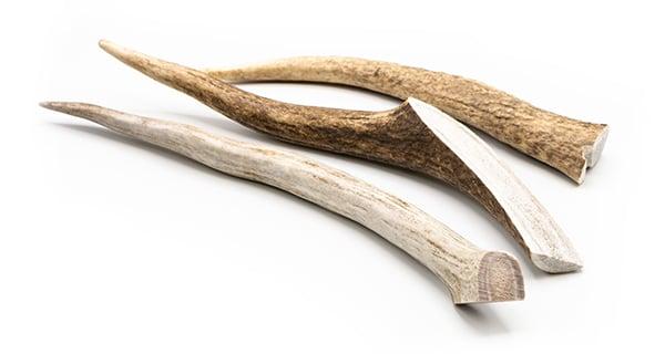 eldons-elk-antlers