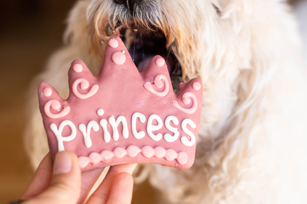 Fluffy-dog-hungry-for-special-princess-cookie