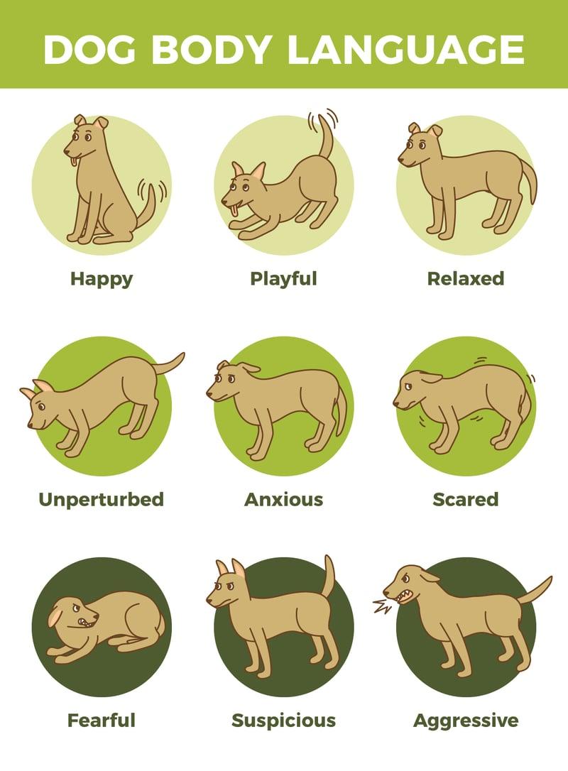 dog-body-language-updated