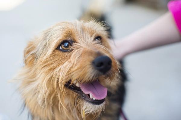 happy-calm-dog