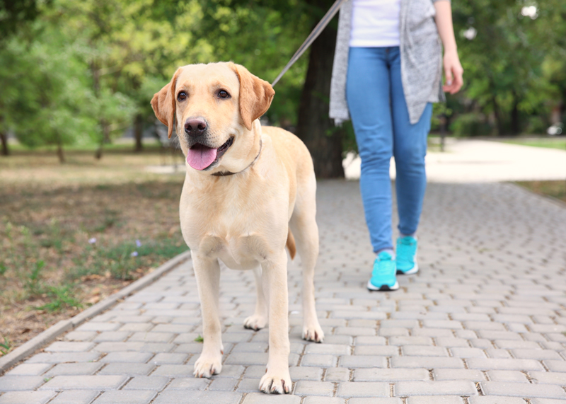 walking-dog-outdoors