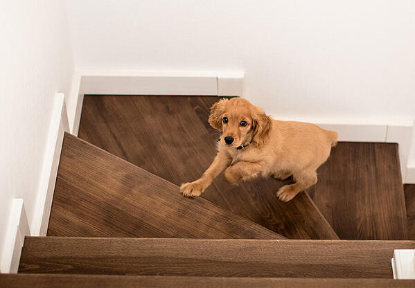 indoor-exercises-dog-article-feature