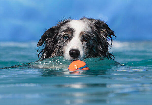 best-floating-dog-toys-article-feature