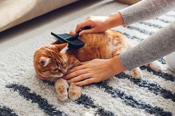 brushing grooming cat