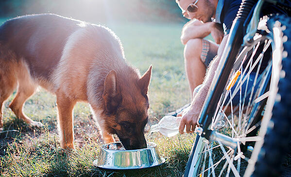dog-drinking-water