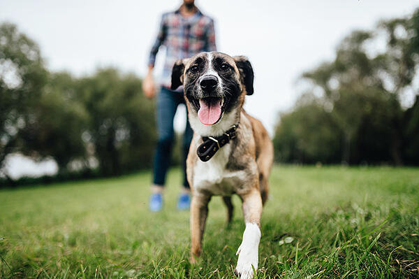 dog-playing-outside-park