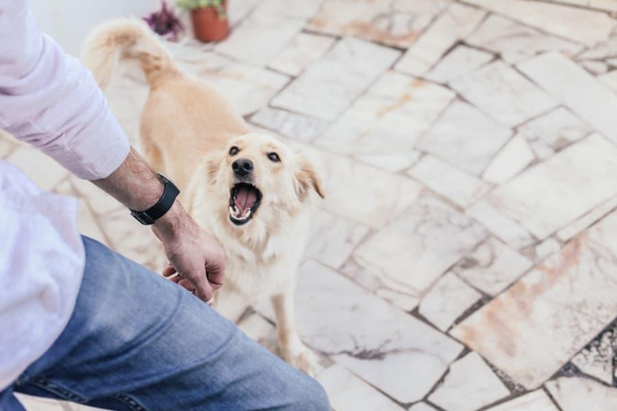 Dog-barking-at-a-stranger-compressed