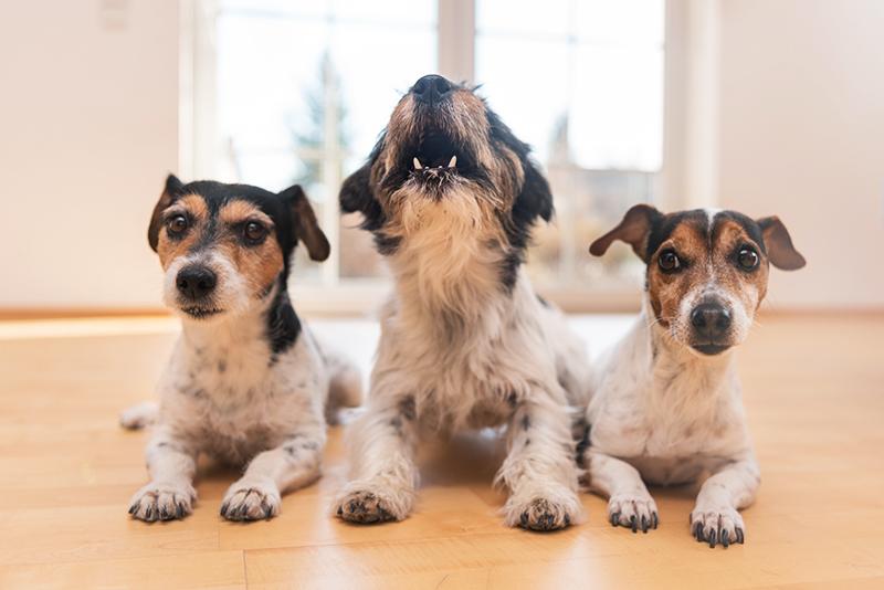 three dogs barking home alone