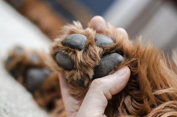 holding-dog-paws