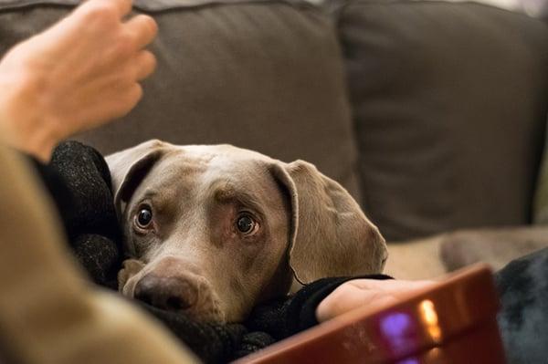 dog-begging-for-food-2