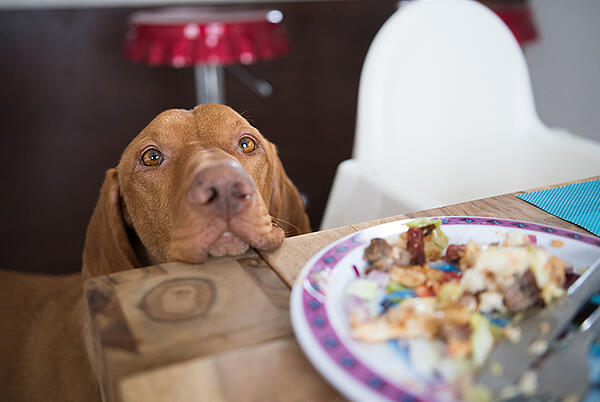 dog-begging-for-food