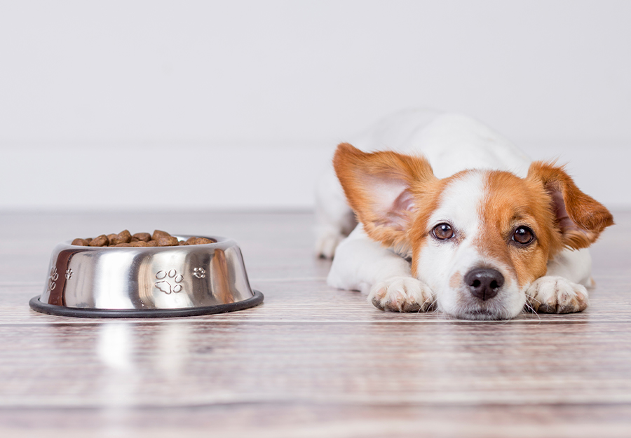 dog-picky-eater-article-feature