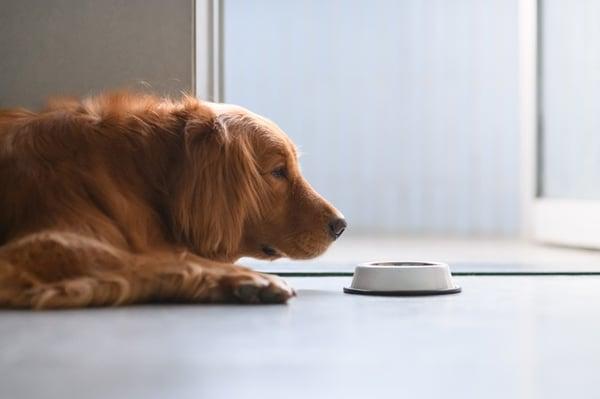 dog-picky-eater