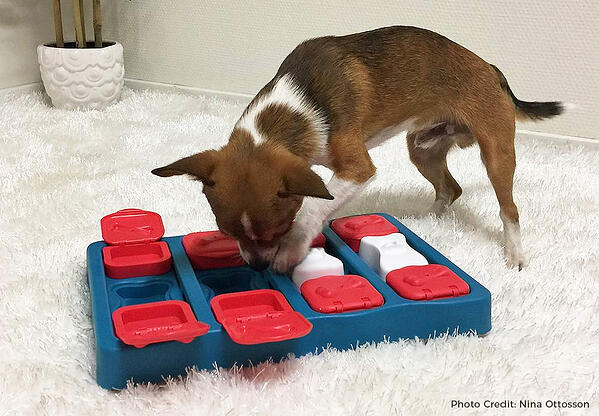 dog-puzzle-toy-credit-1