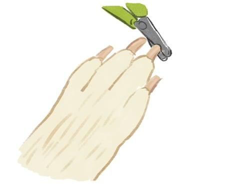 dog-cutting-nail