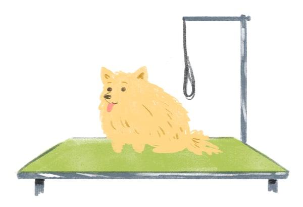 dog-grooming-table-green