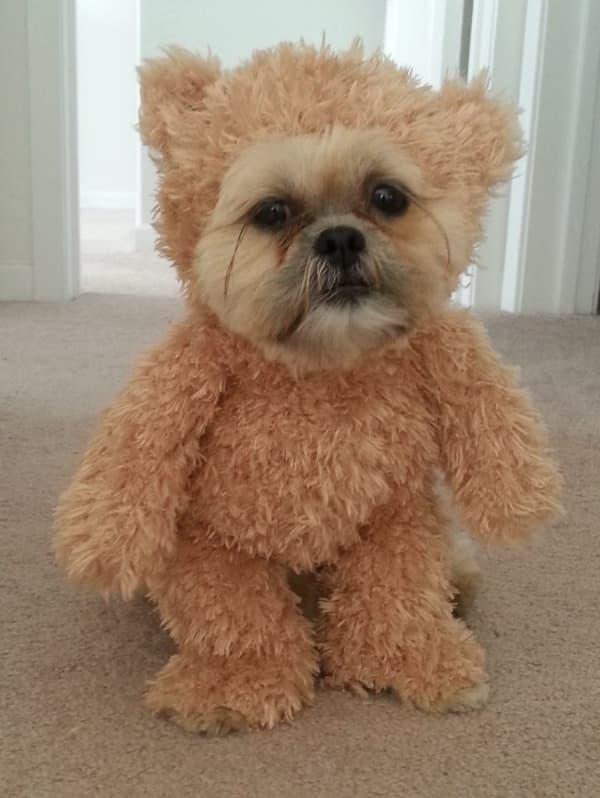 Ewok-dog-costumes-compressed
