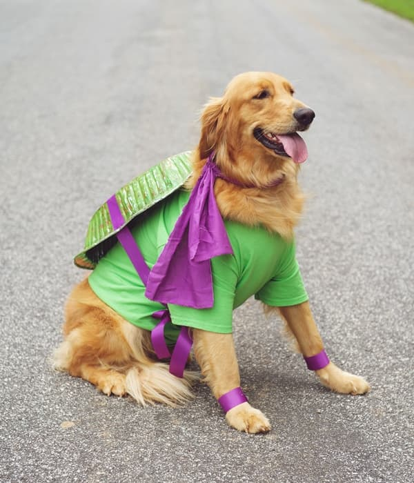 tmnt-dog-costume-outside-compressed