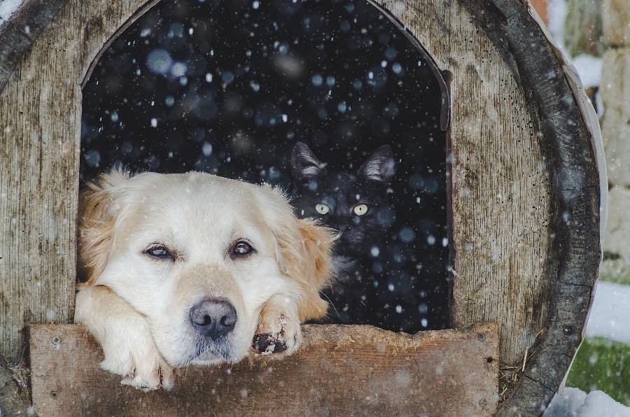 dog-relaxing-in-winter-dog-house