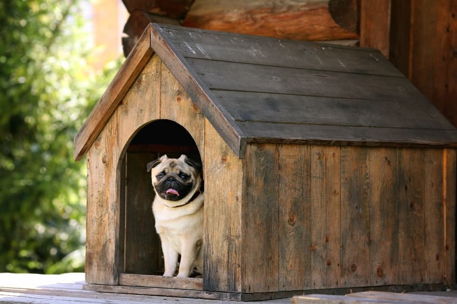 pug-in-wooden-dog-house