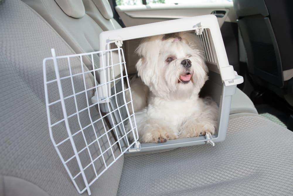 small-white-dog-in car-carrier (1)