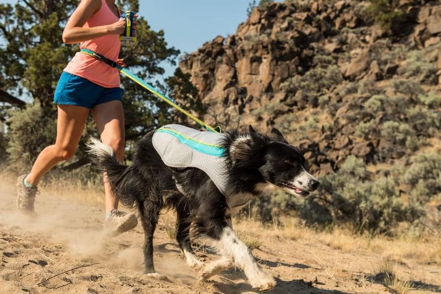 dog-running-wearing-Ruffwear-Swamp-Cooler (1)