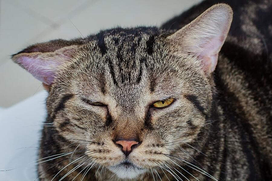 cat-with-irritated-ears (1)