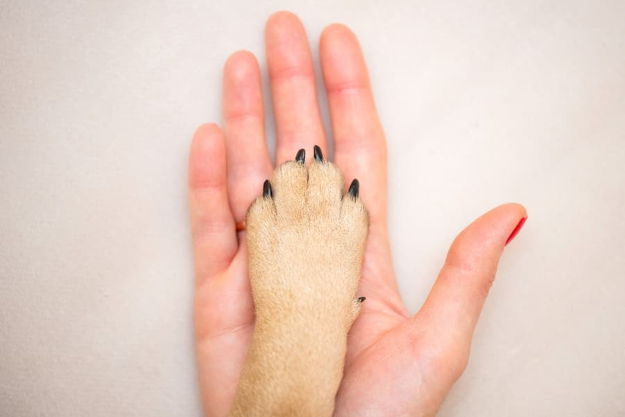 person-holding-dog-paw (1)